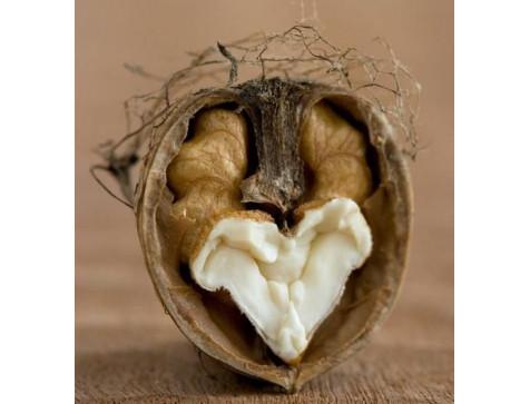Грецкий орех Идеал