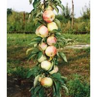 Яблоня Гирлянда (колоновидная)